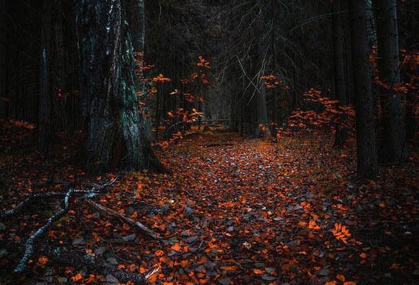 autumn-beautiful-dark-fall-favim-com-3611969